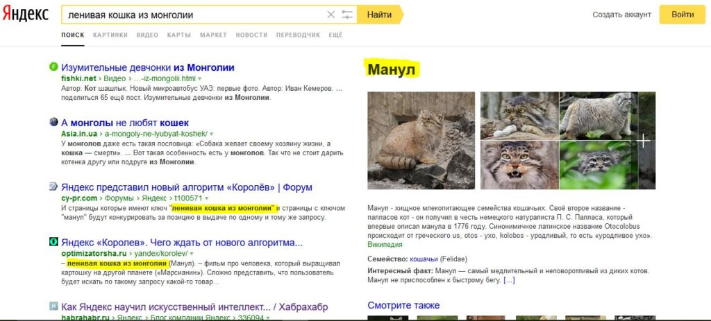 Serp su Yandex per la query: gatto indolente della Mongolia.